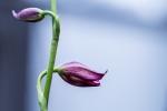 Monatsthema Blüten - Fotografin Jutta R. Buchwald