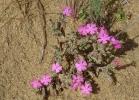Monatsthema Blüten - Fotograf Helmut Joa