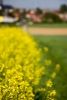 Monatsthema Blüten - Fotografin Nicole Gieseler