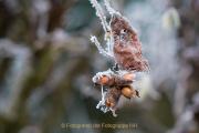 Gefrorenes - Fotograf Olaf Kratge