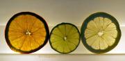 Obst und Gemüse von innen - Fotografin Anne Jeuk