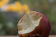 Obst und Gemüse von innen - Fotograf Werner Ch. Buchwald