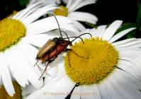 Monatsthema Insekten auf Blüten - Fotografin Anne Jeuk