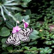 Monatsthema Insekten auf Blüten - Fotografin Jutta R. Buchwald