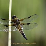 Monatsthema Insekten auf Blüten - Fotograf Joachim Würth
