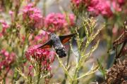 Monatsthema Insekten auf Blüten - Fotograf  Werner Ch. Buchwald