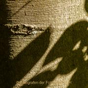 Monatsthema Rinde - Fotograf Clemens Schnitzler