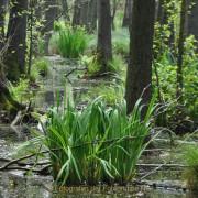 Monatsthema Wald - Fotograf Albert Wenz
