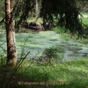 Monatsthema Wald - Fotograf Christoph Fuhrmann