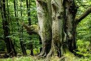 Monatsthema Wald - Fotografin Jutta R. Buchwald
