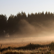 Monatsthema Wald - Fotograf Helmut Joa