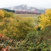 Monatsthema Wald - Fotograf Werner Ch. Buchwald