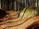 Monatsthema Wald - Fotografin Anne Jeuk