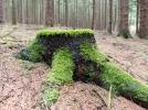 Monatsthema Wald - Fotograf Olaf Kratge