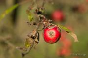 Apfel - Fotograf Olaf Kratge