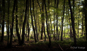 Im Wald - Fotograf Olaf Kratge