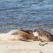 Fotografin Jutta R. Buchwald - West Australien/Houtman Abrolhos Archipel