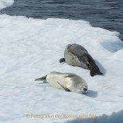 Fotografin Jutta R. Buchwald - Antarktis