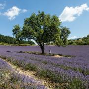 Fotograf  Werner Ch. Buchwald - Provence