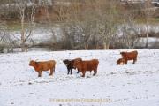 Winterlandschaften - Fotograf Albert Wenz