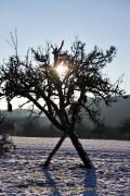 Winterlandschaften - Fotograf Henry Mann