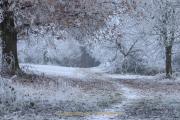 Winterlandschaften - Fotograf  Werner Ch. Buchwald