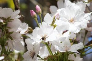 Insekten auf Blüten